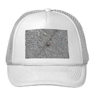 A Toad on the Road Trucker Hats