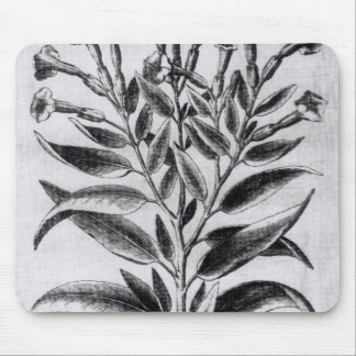 A Tobacco Plant, 1622 Mouse Pad