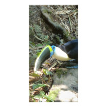 A Toucan Perches on tree roots on the forest floor Card