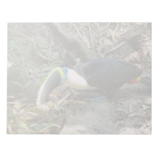 A Toucan Perches on tree roots on the forest floor Notepad