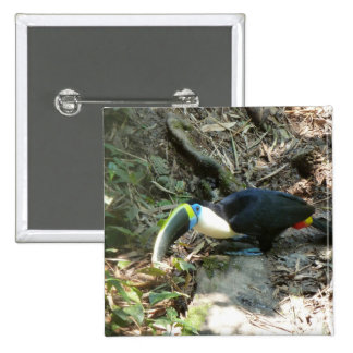 A Toucan Perches on tree roots on the forest floor Pinback Button