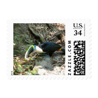 A Toucan Perches on tree roots on the forest floor Postage Stamp