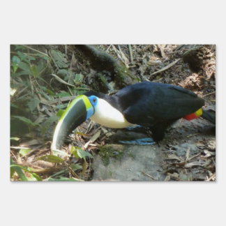 A Toucan Perches on tree roots on the forest floor Sign