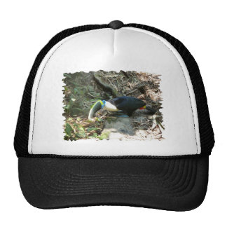 A Toucan Perches on tree roots on the forest floor Trucker Hat