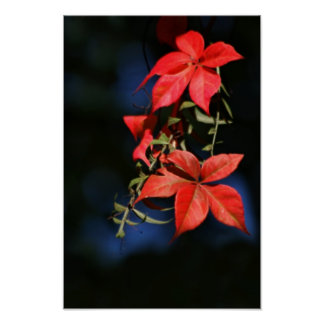 A touch of autumn and maple leaf poster