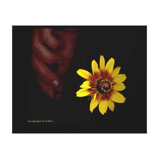 A Touch of Glory Canvas Print