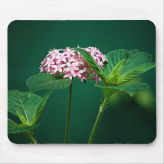 A Touch of Pink in the Green Mousepad