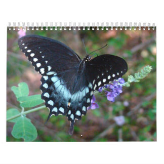 A Touch of the Sun Butterfly Calendar
