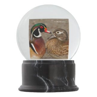 A Touching Moment Between Wood Ducks Snow Globe