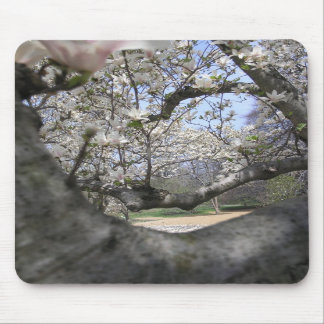 A través de las magnolias alfombrilla de ratones