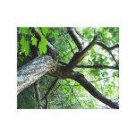 A través de las ramas lona estirada galerias