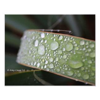 A través de una lluvia brumosa cojinete