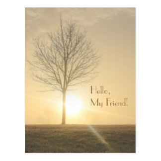 A Tree, Fog & a Sunrise with Beams of Light Postcard