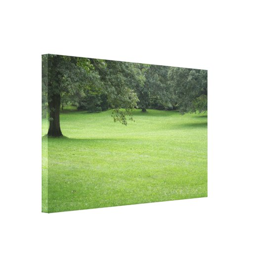 A Tree in a Field of Green Canvas Print