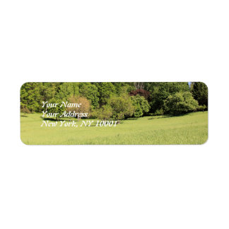 A Tree in a Field of Green Return Address Labels
