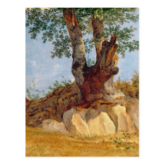 A Tree in Campagna, 1822-23 Postcard