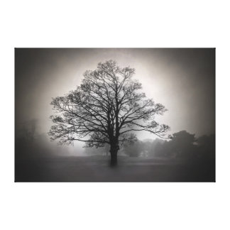 A Tree in the Fog Canvas Prints