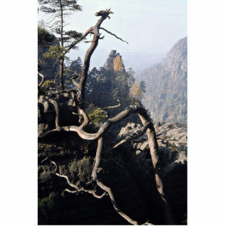 A tree root with rocky valley behind, Czech Republ Photo Cut Outs