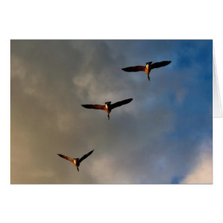 A Trio of Canadian Geese Card