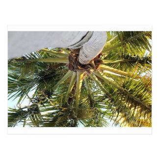 A tropical getaway postcard