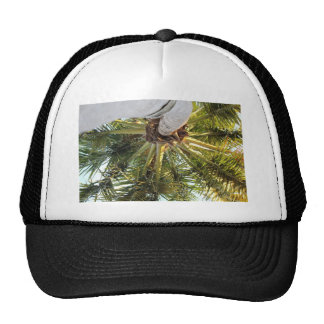 A tropical getaway trucker hat