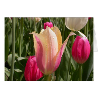 A tulip by any other name stationery note card