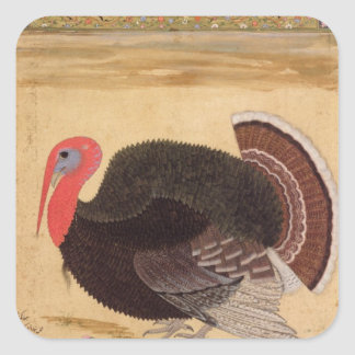 A turkey-cock, brought to Jahangir Square Sticker