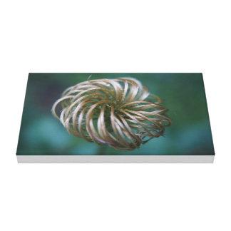 A twisted bud canvas print