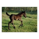 A two week old foals joy greeting card