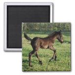 A two week old foals joy magnet
