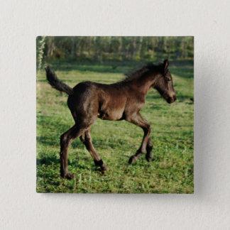 A two week old foals joy pinback button