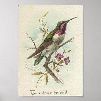 A un estimado amigo, colibrí del vintage poster