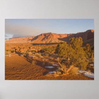 A Utah Juniper Juniperus osteosperma) tree in 2 Posters