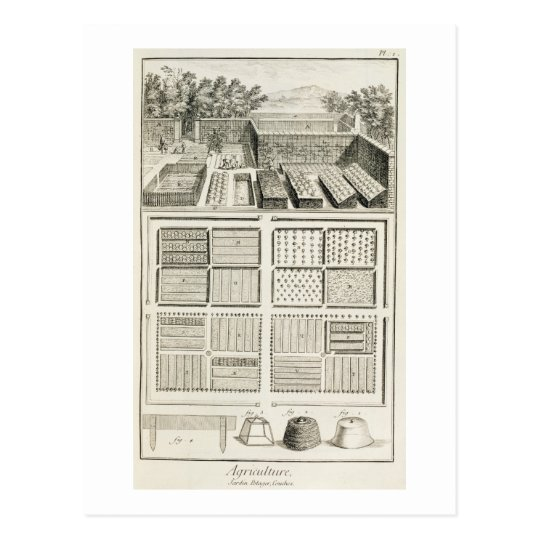 A vegetable garden, from 'The Encyclopedia of Scie Postcard