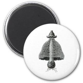 A veiled stinkhorn magnet