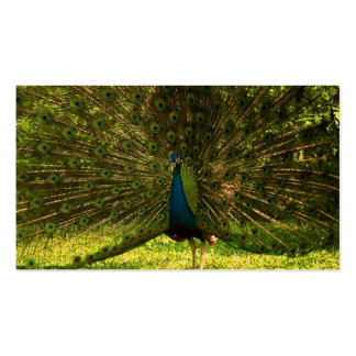 a very colorfull peacock spreading feathers Double-Sided standard business cards (Pack of 100)