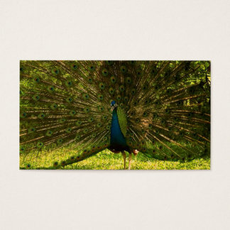 a very colorfull peacock spreading feathers business card