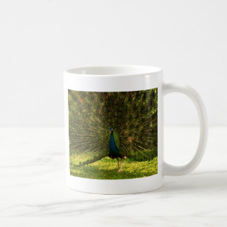 a very colorfull peacock spreading feathers mug