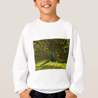 a very colorfull peacock spreading feathers sweatshirt