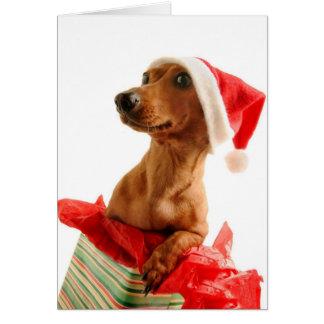 A very Doxie Christmas Card