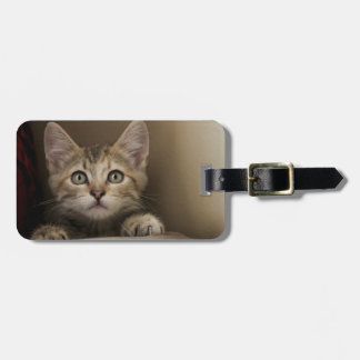 A Very Sweet Tabby Kitten Bag Tag