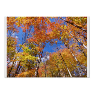 A View of Fall Poster