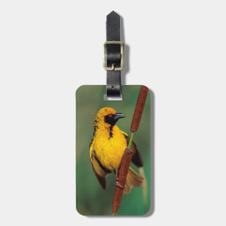A Village Weaver calling while perched on a reed Bag Tag