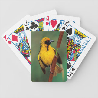 A Village Weaver calling while perched on a reed Bicycle Playing Cards