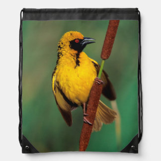 A Village Weaver calling while perched on a reed Drawstring Backpack