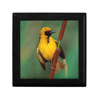 A Village Weaver calling while perched on a reed Keepsake Box