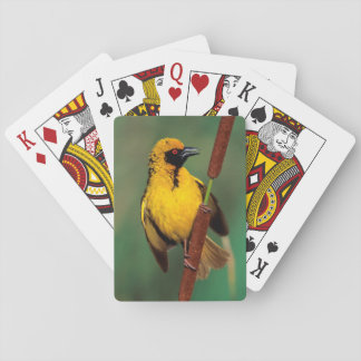 A Village Weaver calling while perched on a reed Playing Cards