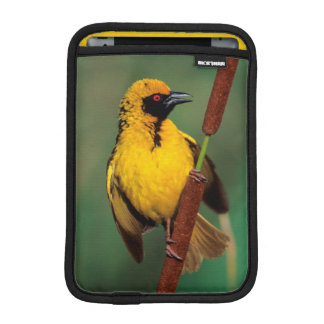 A Village Weaver calling while perched on a reed Sleeve For iPad Mini