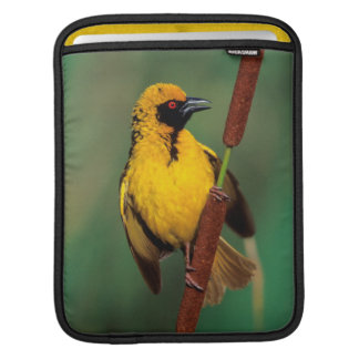 A Village Weaver calling while perched on a reed Sleeve For iPads