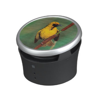A Village Weaver calling while perched on a reed Speaker